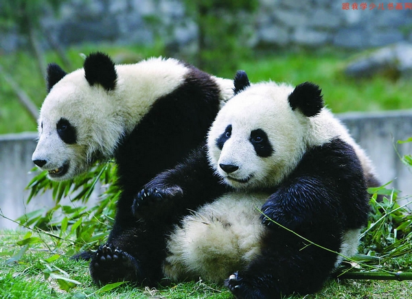 1 Day Beijing Zoo, Tiananmen & Forbidden City Tour